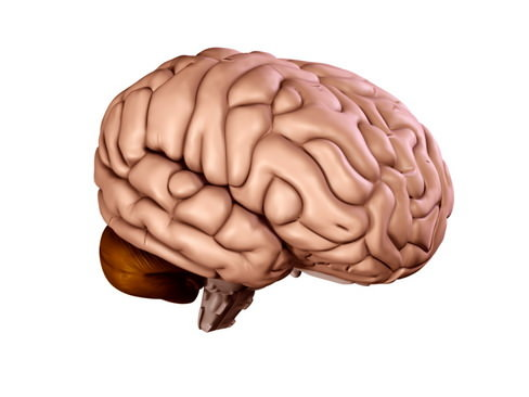 Brain3D model