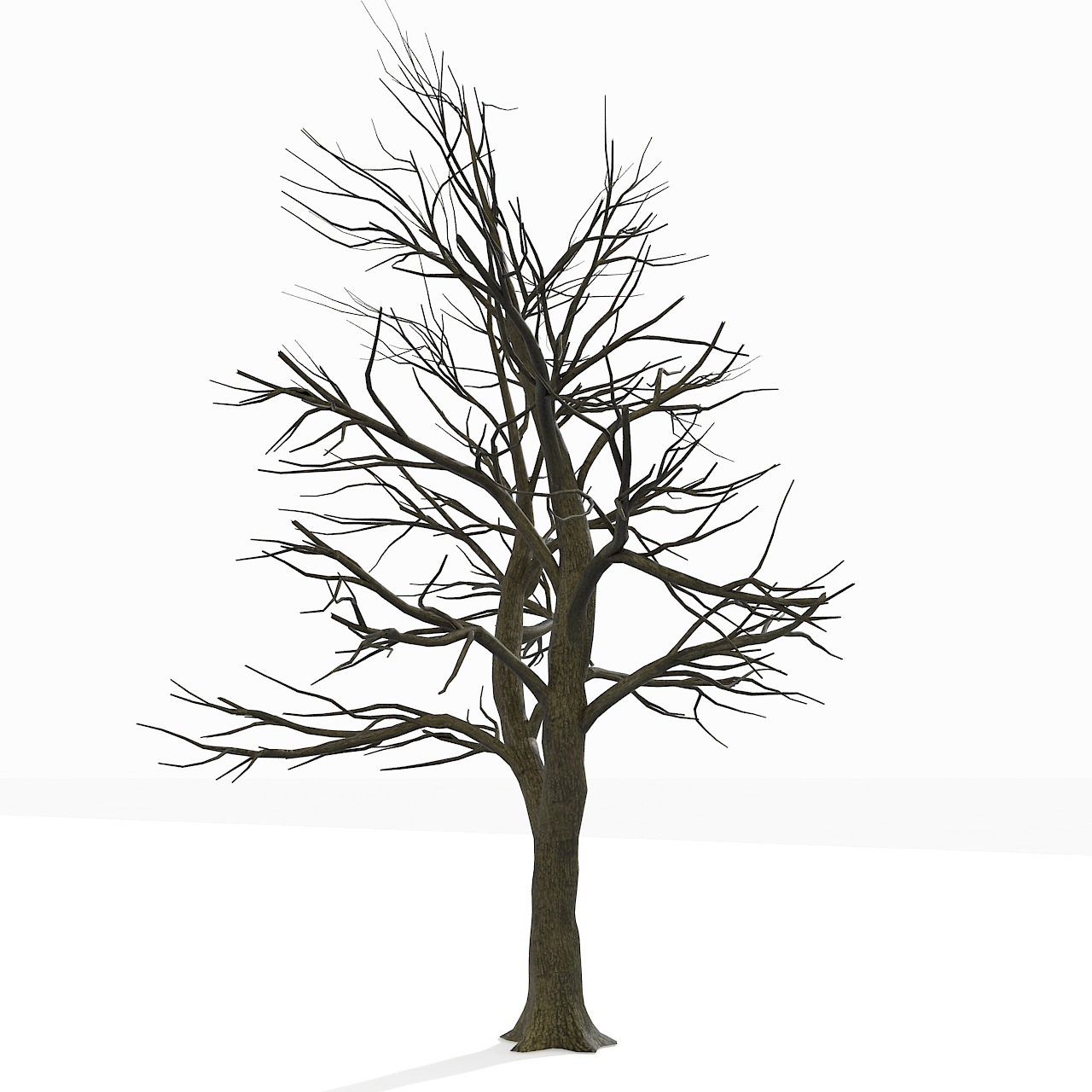 Bare Leafless Autumn Tree 3D Model .max .obj .3ds .fbx - CGTrader.