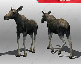 Baby Moose Animated 3D model
