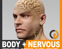 Human Male Body and Nervous System Textured - Anatomy 3D Model