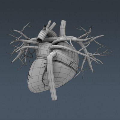 human body internal organs - anatomy 3d model max obj 3ds fbx c4d lwo lw lws 46