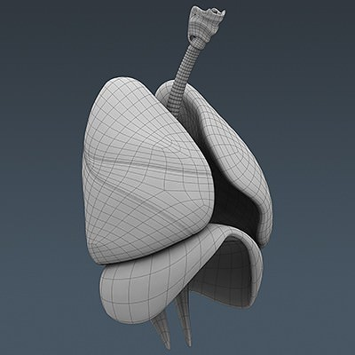 human body internal organs - anatomy 3d model max obj 3ds fbx c4d lwo lw lws 44