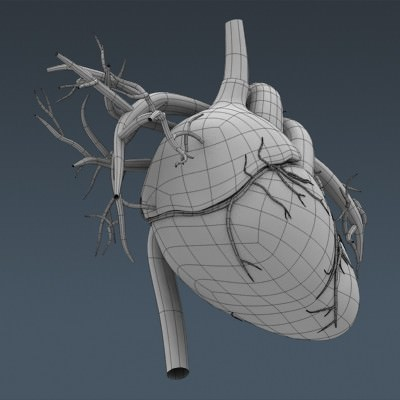 human body internal organs - anatomy 3d model max obj 3ds fbx c4d lwo lw lws 49