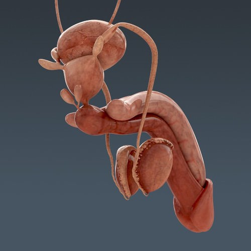 human body internal organs - anatomy 3d model max obj 3ds fbx c4d lwo lw lws 37