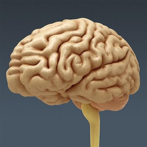 Human Body Internal Organs - Anatomy