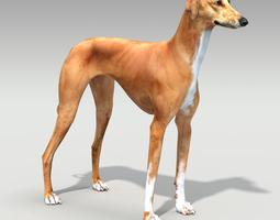 Azawakh dog 3D Model