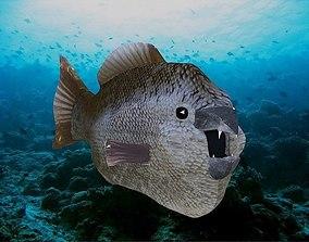 3D Fishy