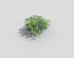 3D model game-ready conifer Shrub