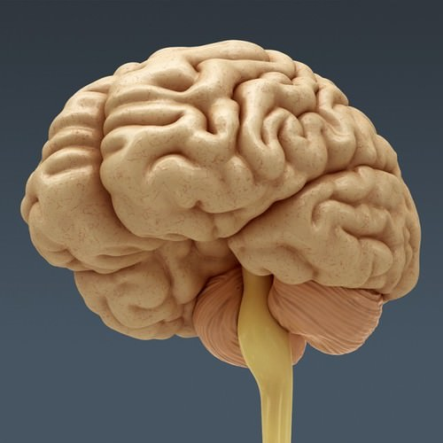 Make 3D Brain Model http://www.cgtrader.com/3d-models/science-medical/medical/human-brain-anatomy