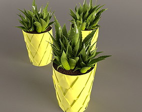 Plant Cactus in yellow pot 3D model
