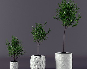 Plant ficus potted 3D model