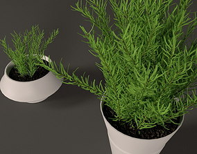 Plant in white plastic pot 3D model