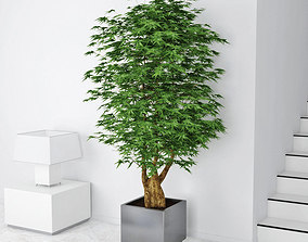houseplant 3D