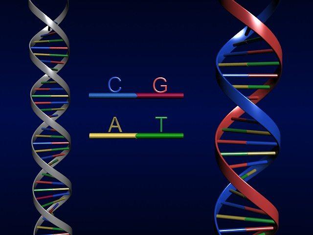 3D model human DNA Strand | CGTrader