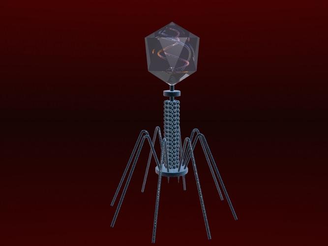 Bacteriophage Virus 3D Model MAX | CGTrader.com