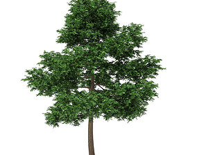 3D model Scots Pine Tree Pinus sylvestris 10m