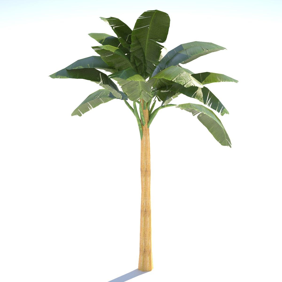 Banana Tree 02 Low Poly 3d Model Game Ready Obj 3ds Fbx Hrc Xsi Dae Skp