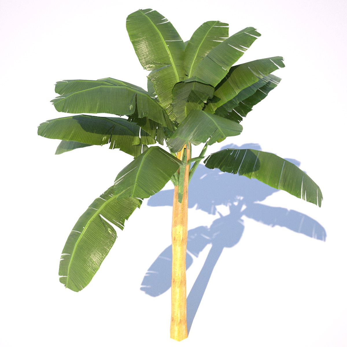 Banana Tree - 02 low poly 3D Model Game ready .obj .3ds ...