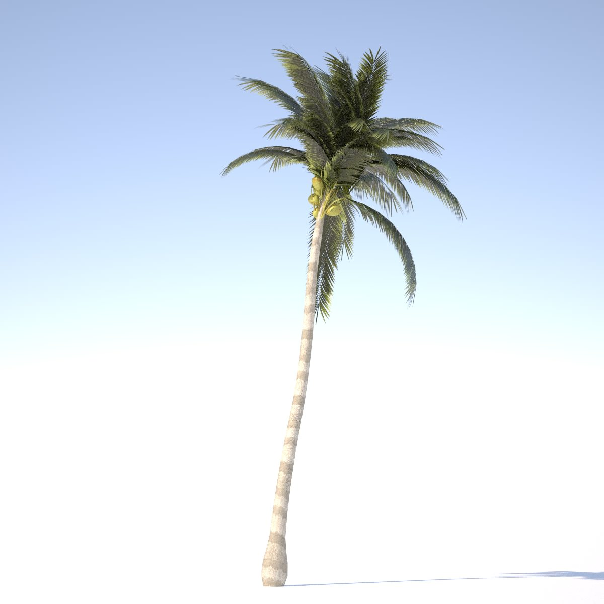 Coconut Tree - 01 med poly 3D Model Game ready .obj .3ds ...