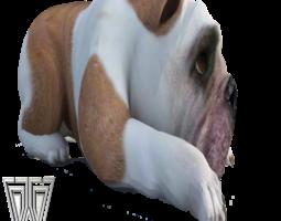 Bulldog 3D Model