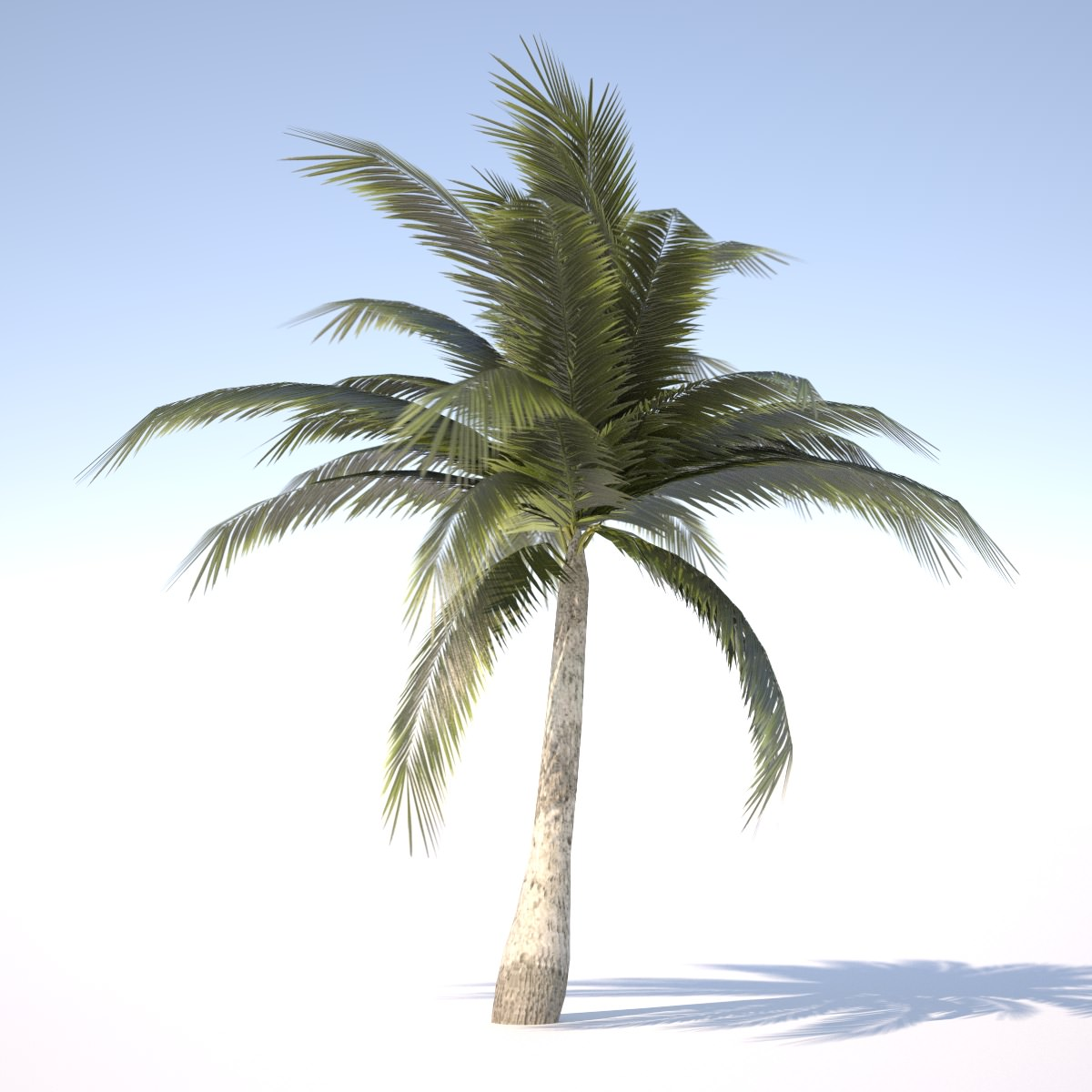 Coconut Palm Tree - 03 med poly 3D Model Game ready .obj ...