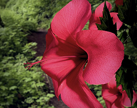 Hibiscus Flower 3D Model VR / AR ready