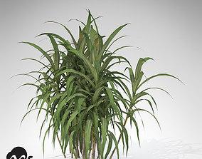 XfrogPlants Sugar Cane 3D