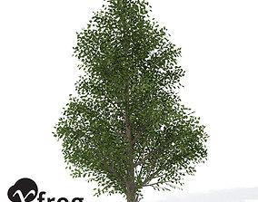 3D XfrogPlants Holly