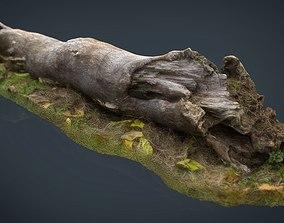 Dead trunk 3D asset