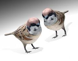 Sparrow bird 3D