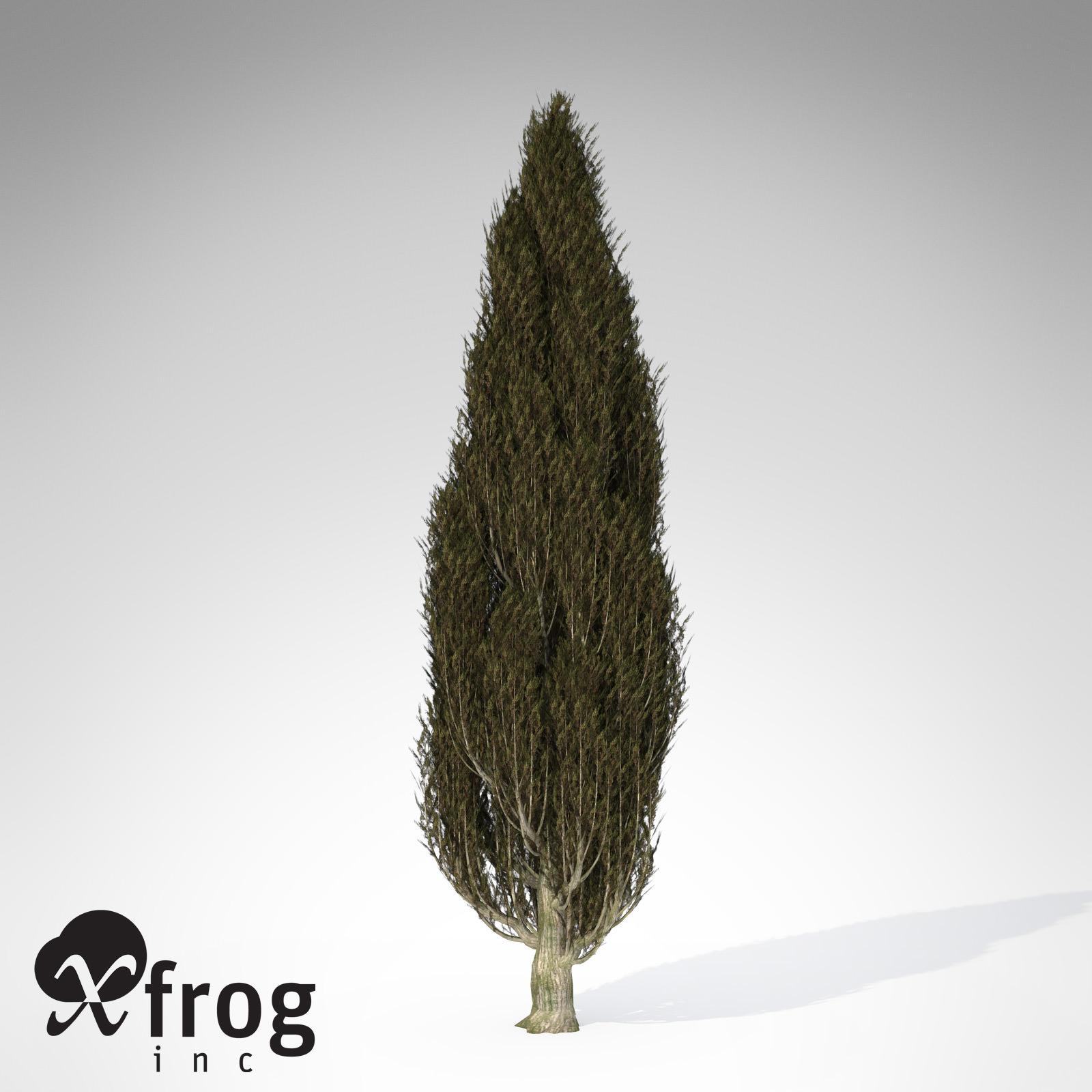 XfrogPlants Italian Cypress