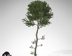 3D XfrogPlants Sea Pine