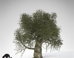XfrogPlants Olive 3D Model
