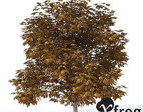 XfrogPlants Autumn Horse Chestnut 3D model