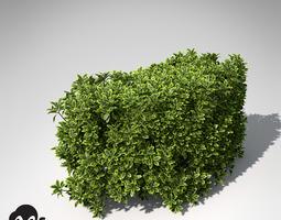 3D model XfrogPlants Golden Privet