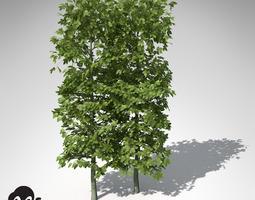 xfrogplants european hornbeam hedges 3d model