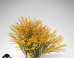 XfrogPlants Spanish Broom 3D Model