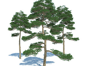 exterior Pine - Set 3 3D