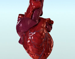 Human Hart Anatomy 3D Model