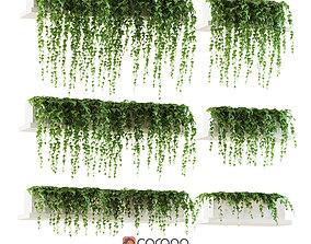 Ivy on the shelves 3D model