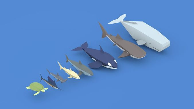 low poly pirate sea animals 3d model low-poly obj mtl 3ds fbx c4d 1
