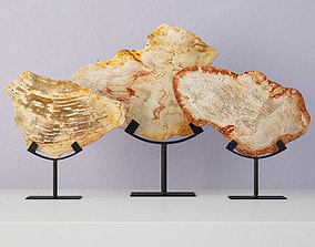 Petrified Wood Slices On Stand 3 3D model