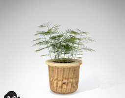xfrogplants asparagus fern 3d model max 3ds c4d lwo lw lws ma mb mtl