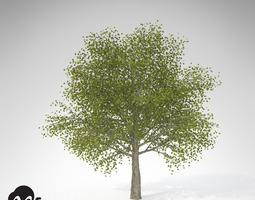 xfrogplants katsura 3d