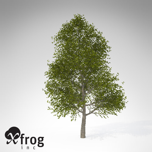 XfrogPlants Japanese Hop Hornbeam3D model