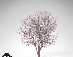 3d model xfrogplants saucer magnolia