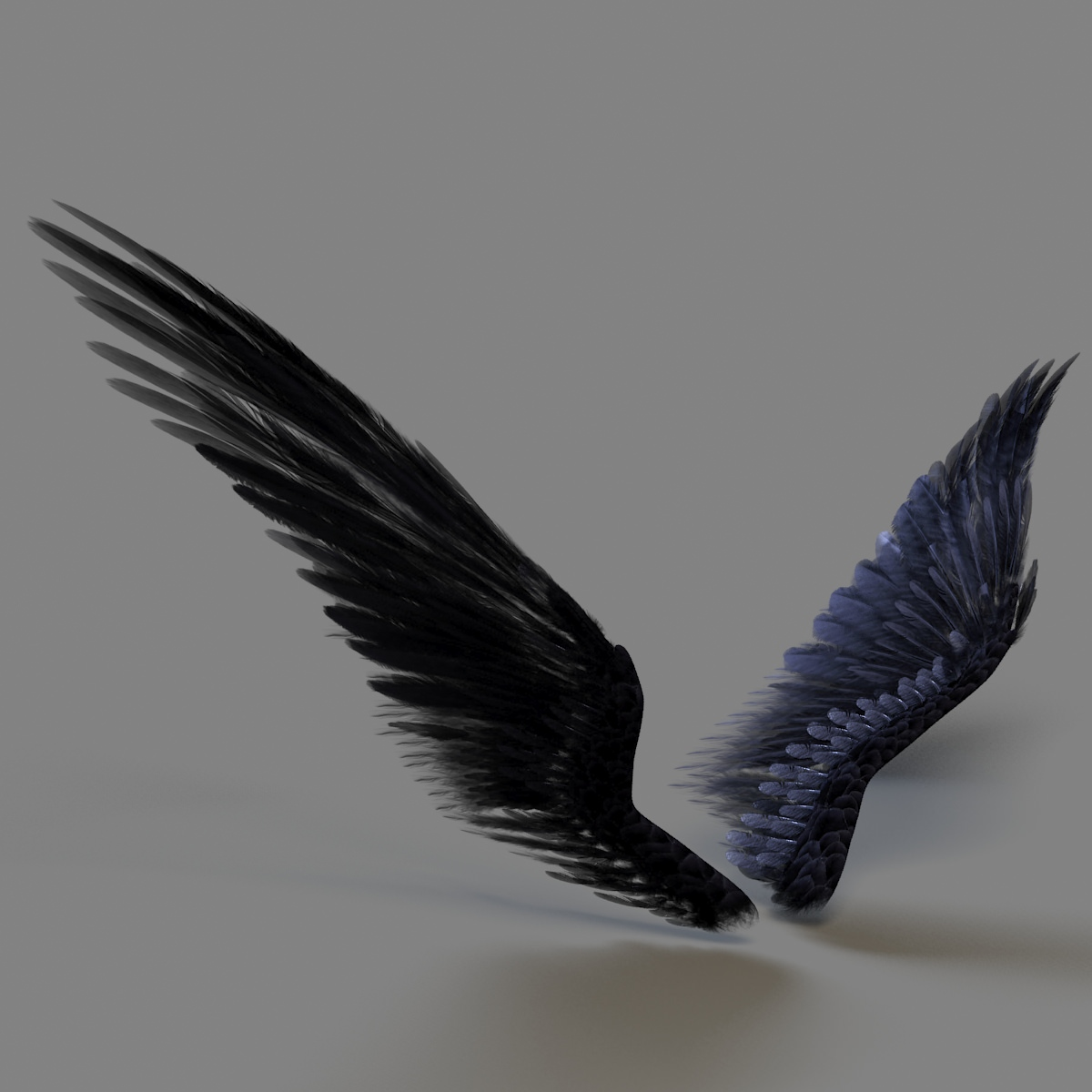 wings 3D Models - CGTrader.com