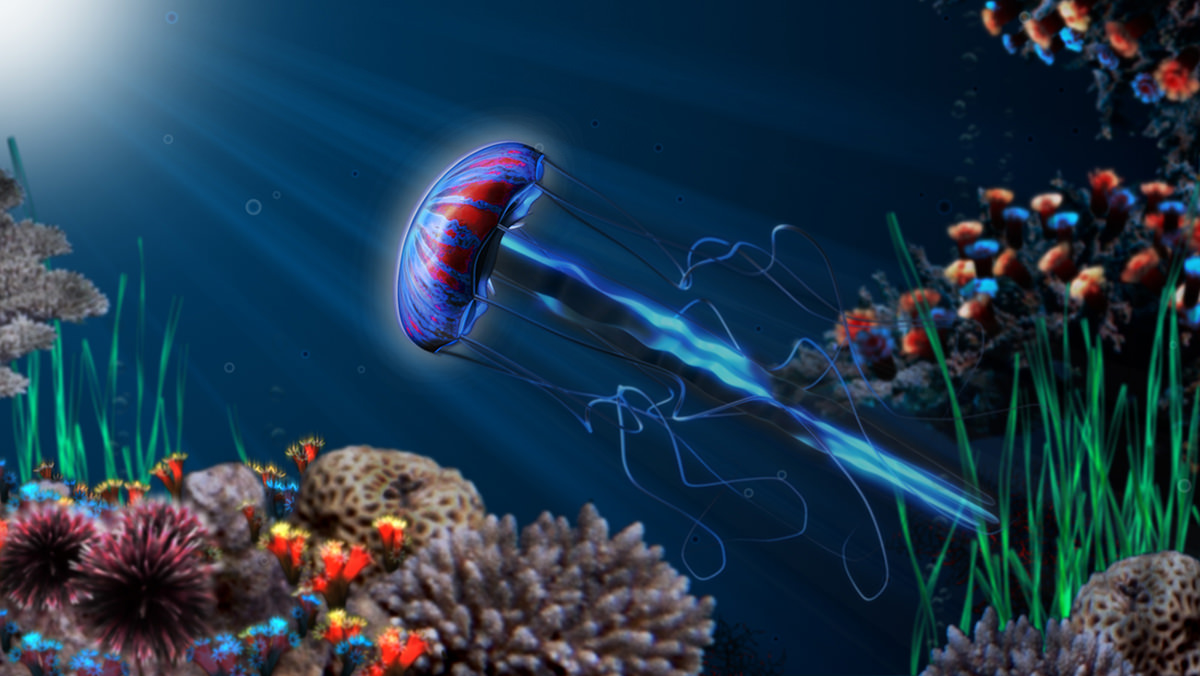 Jellyfish 3d