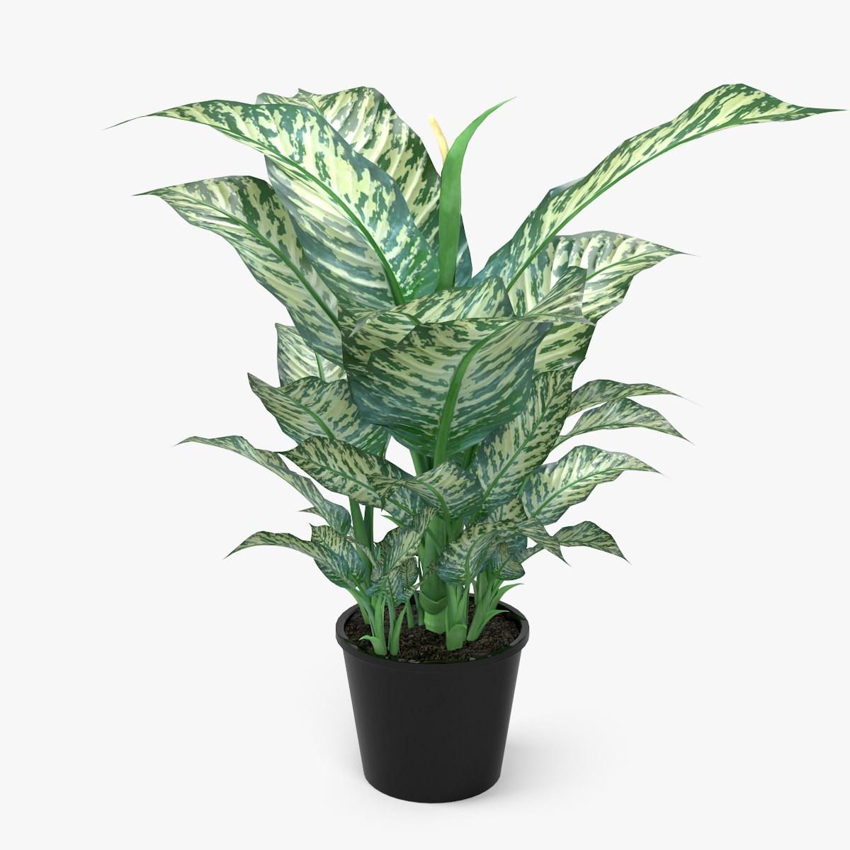 Dieffenbachia Picta Plant 3d Model Max Obj Fbx C4d