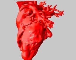 3d printable model anatomical human heart